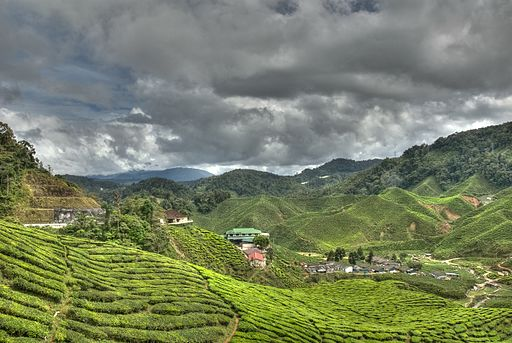 Doing the Cameron Highlands on a budget 1